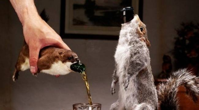 squirrel-beer.jpg.650x0_q70_crop-smart.jpg
