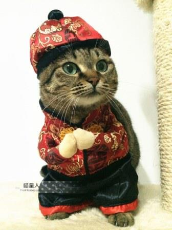 whimsy-Free-shipping-so-funny-Chinese-style-Happy-New-Year-Pet-cat-dog-Dress-suit-clothes.jpg