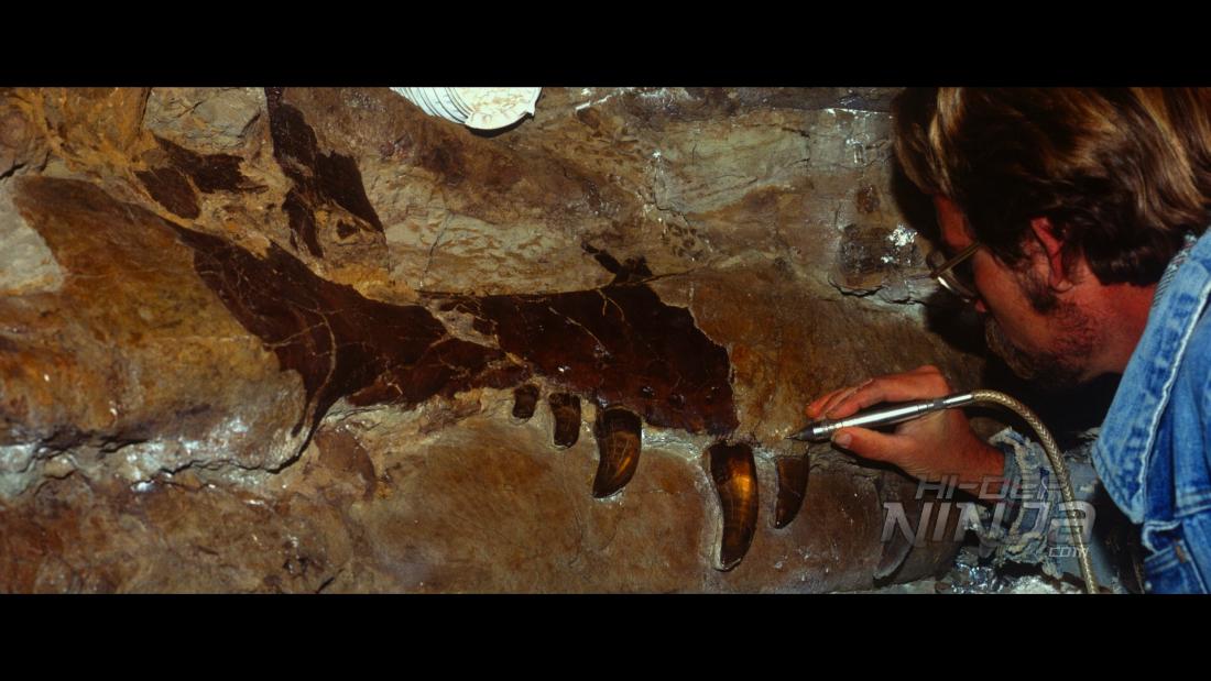 dinosaur-13-06