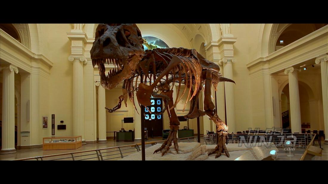dinosaur-13-09