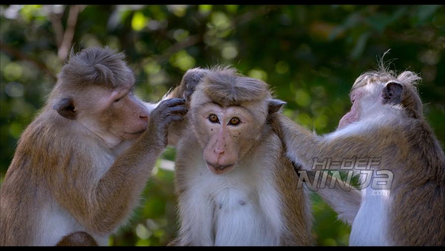 monkey-kingdom-review-01