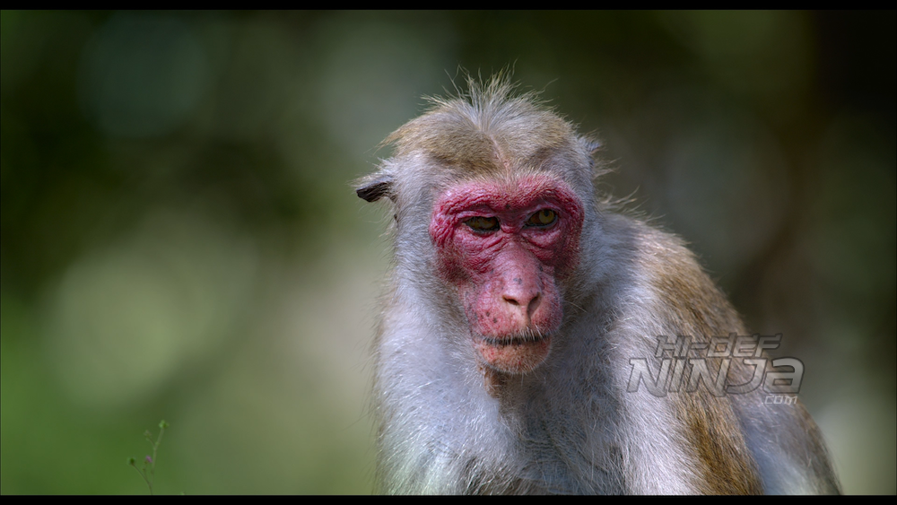 monkey-kingdom-review-02