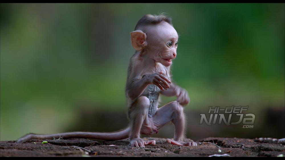 monkey-kingdom-review-03