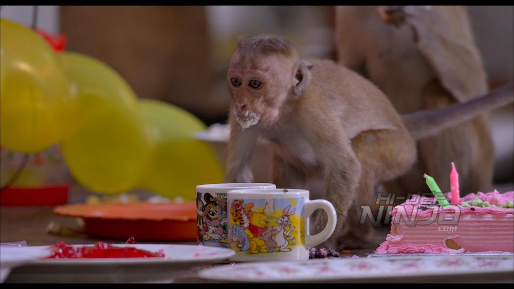 monkey-kingdom-review-07