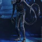 alien warrior-HT-02