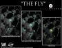 the-fly-gma-banner